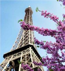 Paris 2012 : dysgénésie du segment antérieur, strabismes de l'adulte